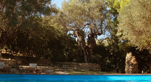 dattilo pool